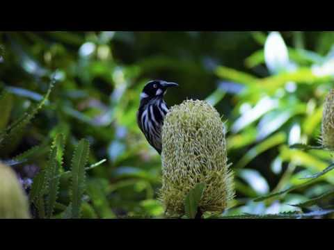 Yanni  -  Retreat to Dream  (Australia)