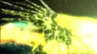 Babylon 5-Vorlon versus Shadow