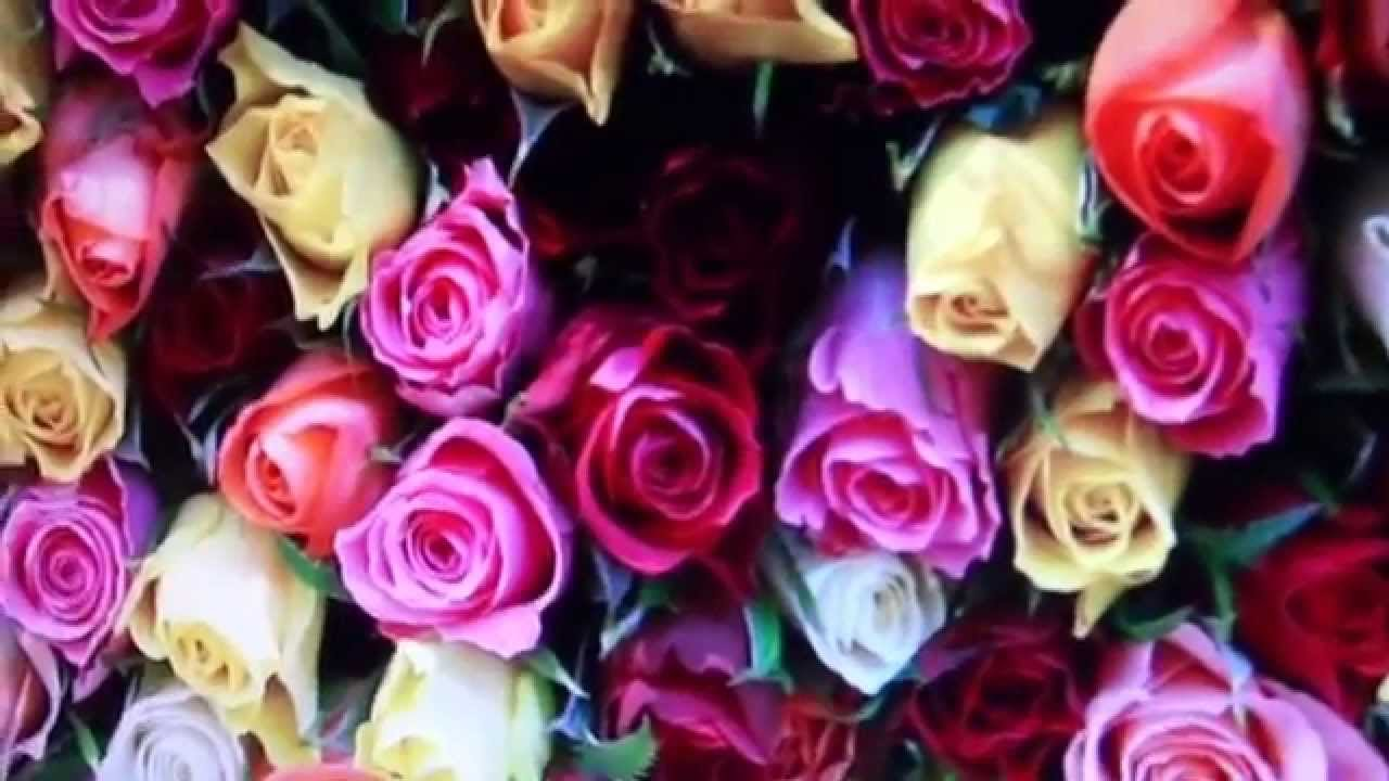 A VIRTUAL BOUQUET OF ROSES FOR VALENTINE\'S DAY - YouTube