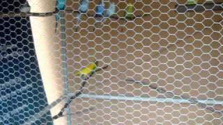 Viveiro de Pássaros - Parte 4