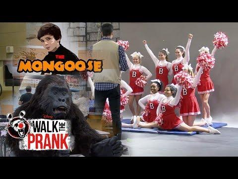 School Hijinks! Pranks Compilation | Walk the Prank | Disney XD