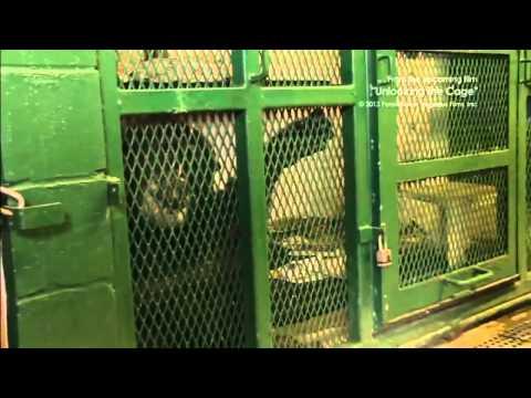Chimpanzee lawsuit  Activists demand 'legal personhood' for New York chimps