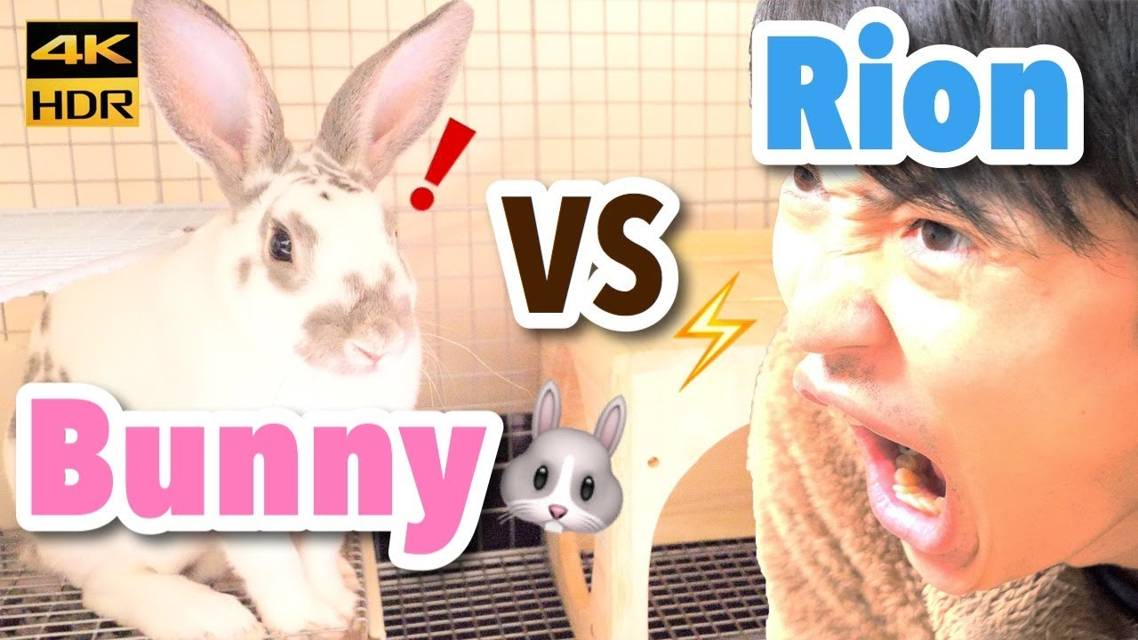 Teaching Rabbit Give Paw Trick Shake Mini Rex Can Give Paw 105