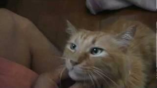 可愛い猫のウィリーは野良猫出身。 皆様、犬や猫は室内で飼いましょう。...