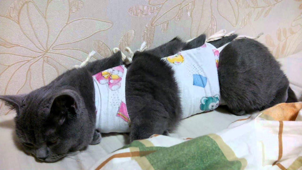 кошка после стерелизации