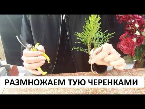 Вопрос: Если бы у вас был бы свой сад или огород, что бы вы там посадили?