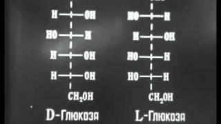 Углеводы. Моносахариды (Леннаучфильм)