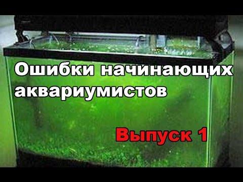 Ошибки начинающих аквариумистов. Выпуск 1