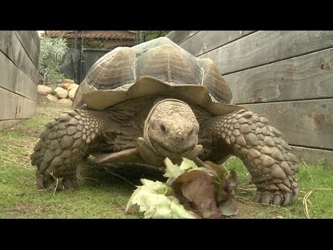 Amazing Animal Facts!: Turtle Power