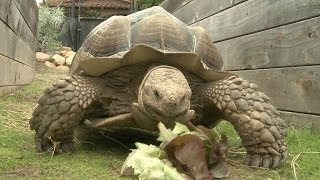 Amazing Animal Facts!: Turtle Power