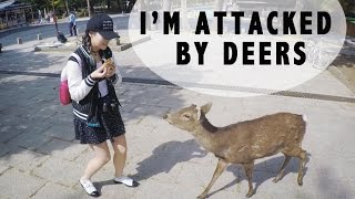 JAPAN VLOG: DEER ATTACK AT NARA, FUSHIMI INARI, UNIVERSAL STUDIO JAPAN
