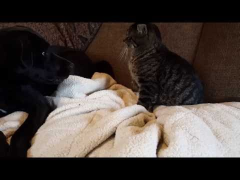 Cat Steals Food From Polite Dog