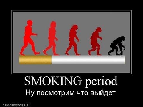 Вред курения и алкоголя для организма человека. Влияние