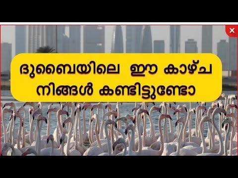 Dubai Ras Al Khor Wildlife Sanctuary Malayalam
