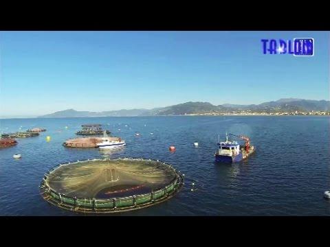 tigullio un allevamento di pesci in mare aperto youtube