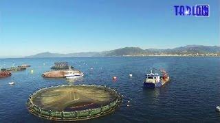 Tigullio, un allevamento di pesci in mare aperto