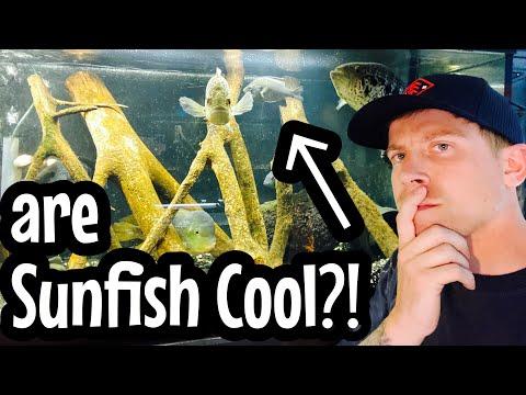 Sunfish Aquarium Setup Worth It?