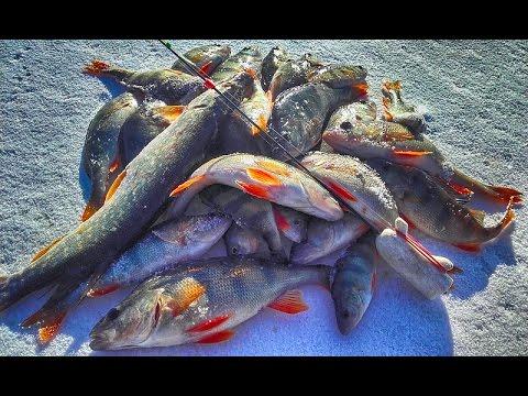 Первый лёд зимняя рыбалка | Косим окуня на блесну и балансир ...