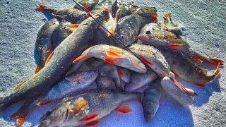 Первый лёд зимняя рыбалка | Косим окуня на блесну и балансир!