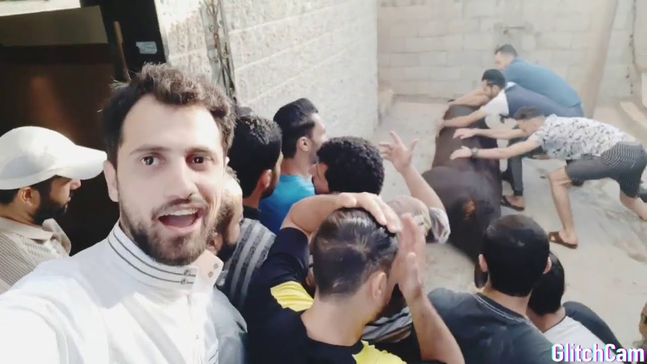 ذبح ثلاث عجول في دقيقة _  عيد الأضحى المبارك من قلب غزة