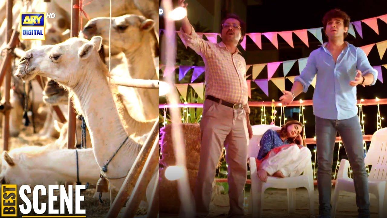 Oont chori hogaya | Shahroz Sabzwari | Saboor Aly | ARY Digital Drama