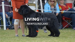 LIVING WITH NEWFOUNDLAND DOGS