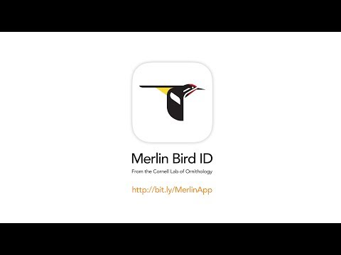 Merlin Bird ID by Cornell Lab of Ornithology