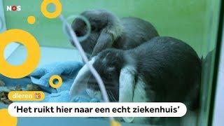 Er zijn steeds meer dierenziekenhuizen