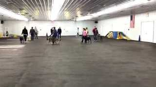 World Class Dog Kennels, Pet Training, Chicago, Il.