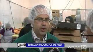 Piñas cultivadas por confinados en Aguadilla