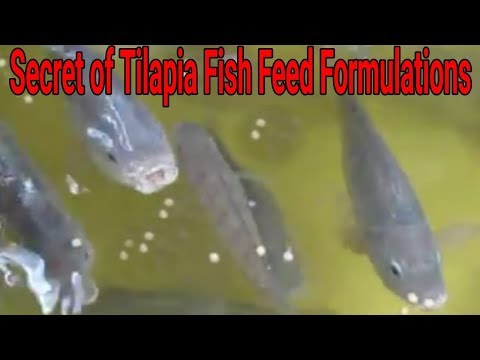 On Farm Tilapia Fish Feed Formulations