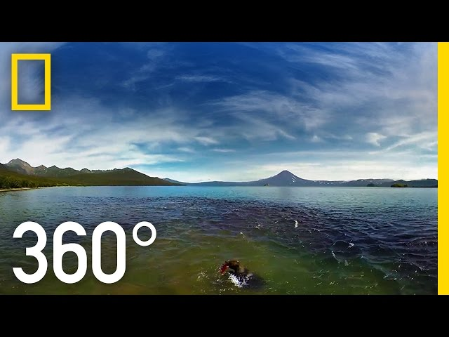 Swimming With Bears in 360° | National Geographic