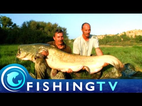 Fishing For Catfish On The River Ebro Maniacs - Fishing TV