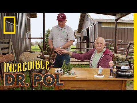 Reindeer Games | Coffee Break With Dr. Pol (Season 3, Episode 2)
