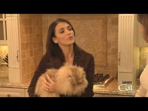 Housecat Housecall® Webisode  Midas