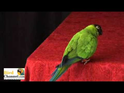 Get Your Bird To Exercise - BirdChannel.com