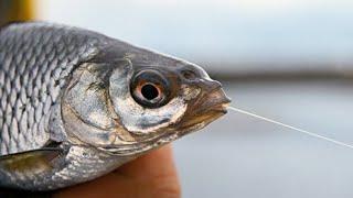 РЫБАЛКА на ФИДЕР ПОЗДНЕЙ ОСЕНЬЮ Крупная ПЛОТВА прёт на фидер Душевная Рыбалка на ДИКОЙ РЕКЕ