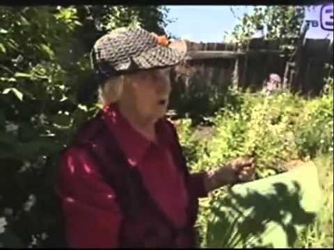 Финики: лечение финиками в народной медицине - Домашнее