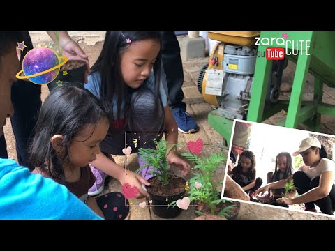 Yuk Berkebun | Zara Cute belajar Menanam Tanaman di Kebun Karinda | Kebun Rumah Zara Cute