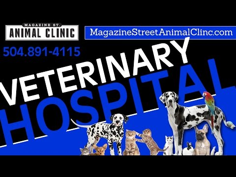 Veterinary Hospital New Orleans Louisiana - Magazine Street Animal Clinic