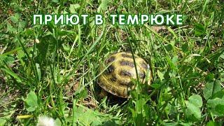 Черепахи в новом вольере, Темрюк