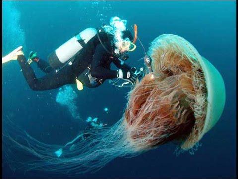 Super Jellyfish
