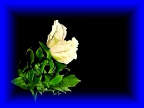 Hoa đẹp.mpg