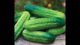 Grow cucumbers without the bitterness