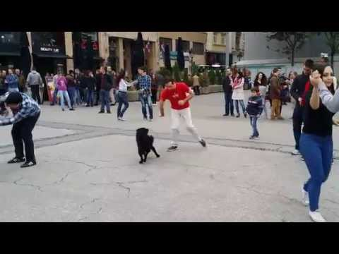 International Rueda de Casino Belgrade 2015 - Dog scene with Miloš Ćemalović (Naturally Dance)