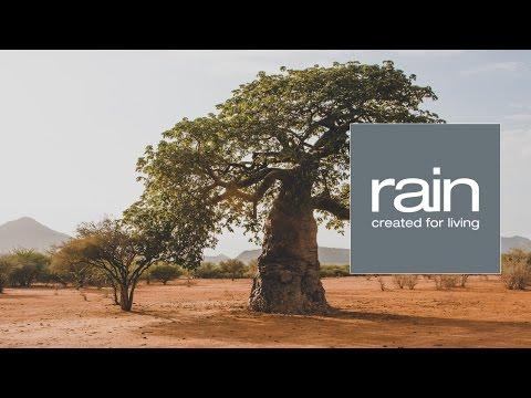 Ingredient Journeys - Baobab: The Upside Down Tree of Africa