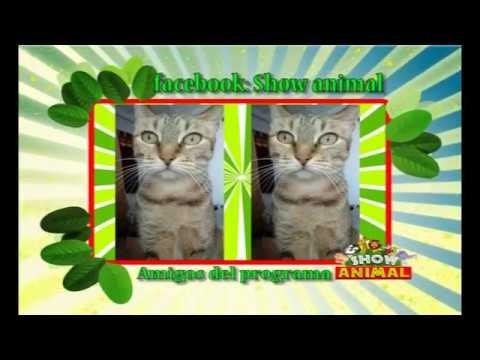 BLOQUE Nº 02 PROGRAMA Nº 315   SHOW ANIMAL 04 02 2018