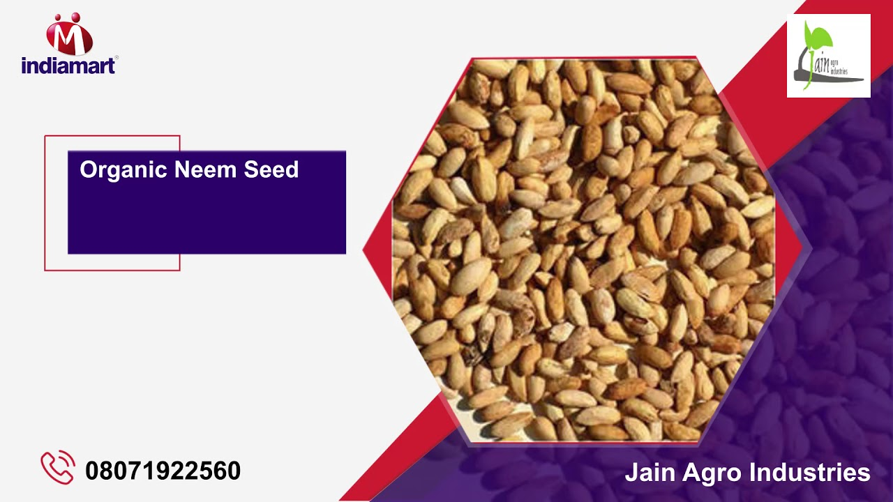 Manufacturing industrial fruit seeds