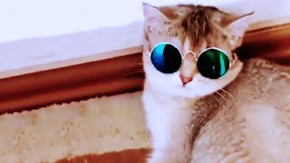 Try Not To Laugh Watching Funny Animals Compilation  Funniest Animals Vines  cute pets compilation
