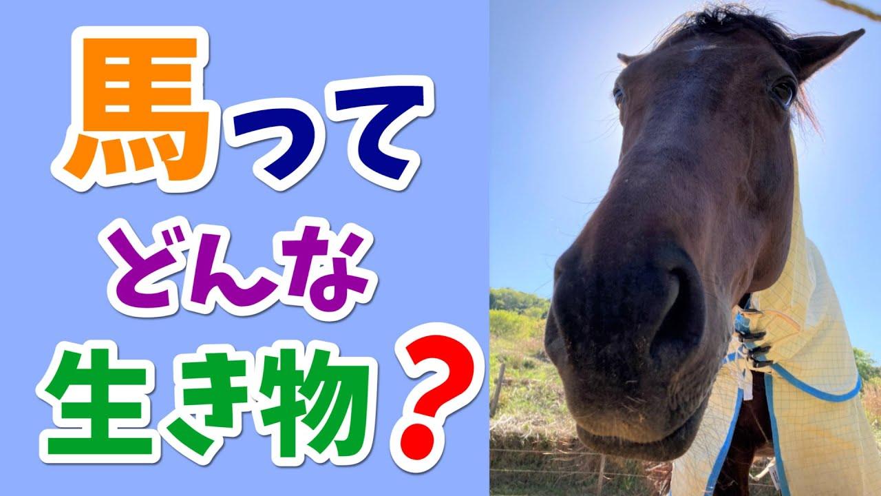 馬ってどんな生き物?